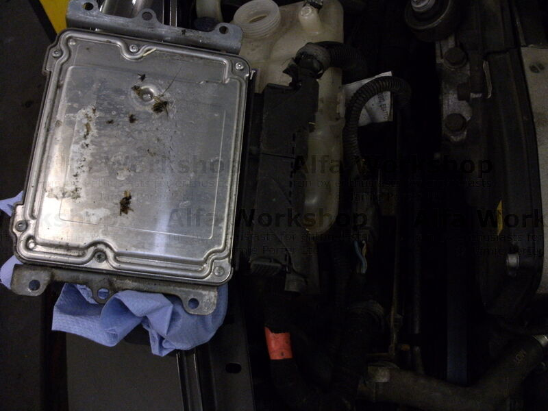 <p>Remove the engine ECU from the cam belt end of the engine, dont disconect it, and place it on the inner wing.  <br />